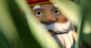 sarah-brink-gnome-gnome72dpi